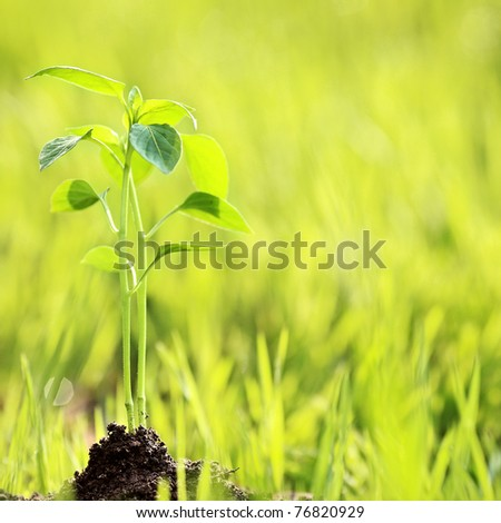 Young plant against green nature background. Shallow depth of fields - stock photo