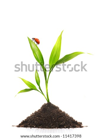 Young plant and a small ladybug sitting on it's leaf - stock photo