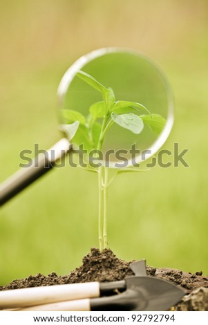 Young plant and agricultural implements against spring natural background. Ecology concept - stock photo