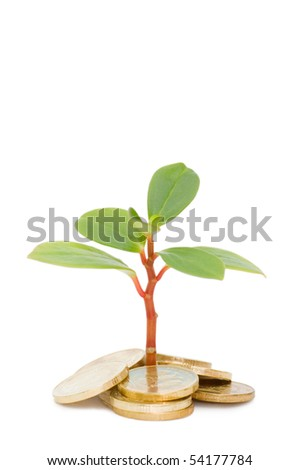 Young plant and coins isolated over white - stock photo