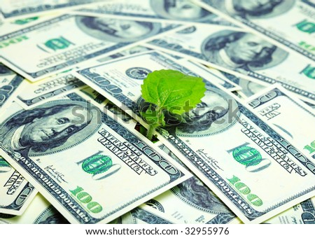 young plant and dollars - growing money concept