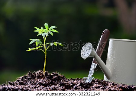 Young plant and garden equipments in the morning light - stock photo