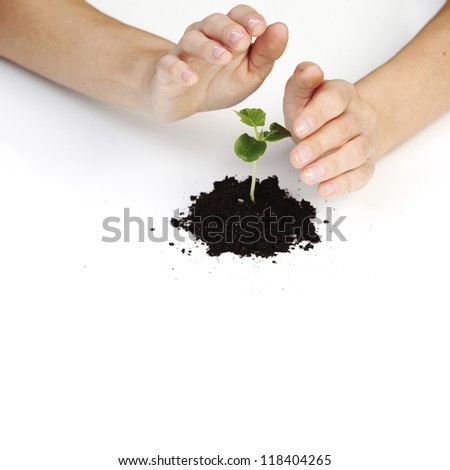 young plant cover their hands on a white background