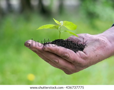 Young plant - green sprout in the human palm