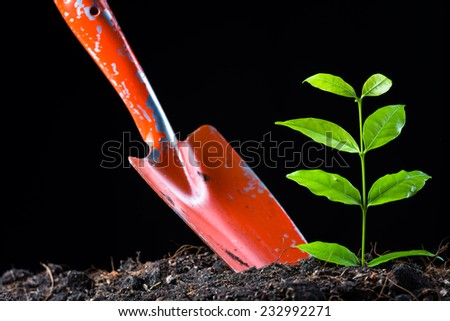 Young plant growing from soil with shovel on black background - stock photo