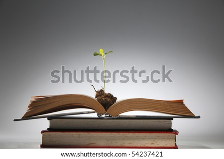 young plant growing from the book