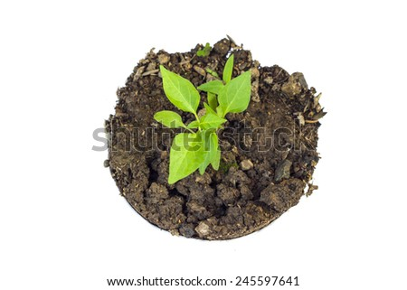 Young plant growing in a soil on white background