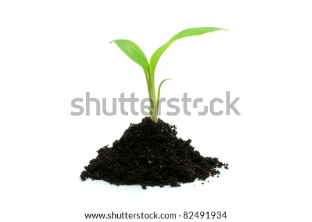 Young plant growing in soil isolated on the white background