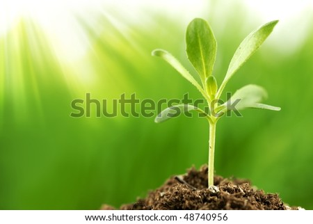 Young plant growing in sunshine(Shallow Dof) - stock photo