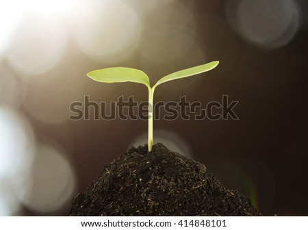 Young plant growing in the morning light and green bokeh background , new life growth ecology concept - stock photo