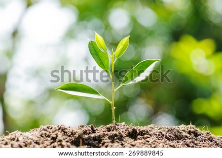 Young plant growing on dry soil with green background under the sunlight. Earth day concept - stock photo