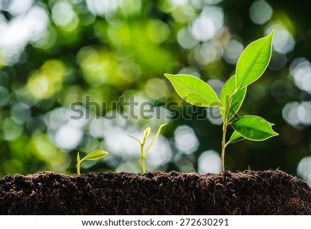 Young plant growing on soil with green bokeh background