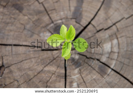 young plant growing on tree stump - stock photo