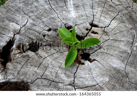 young plant growing on tree stump, hope concept - stock photo