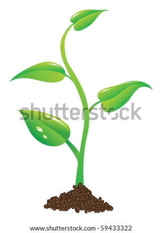 young plant illustration - stock photo