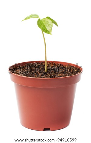young plant in a flower pot - stock photo