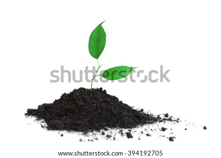 Young plant in ground, isolated on white - stock photo