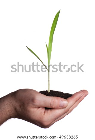 Young plant in hand - concept - stock photo