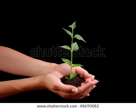 Young plant in hand on black background