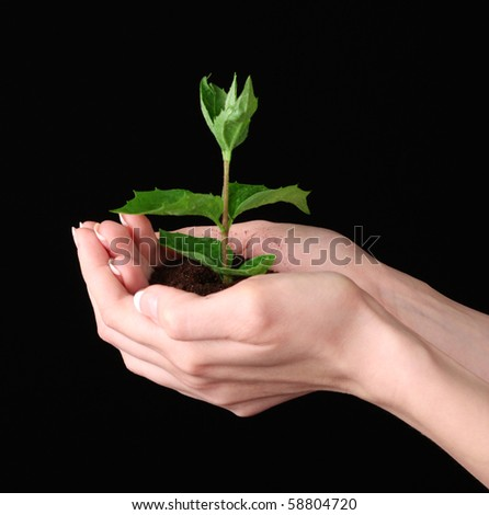 Young plant in hand over black background - stock photo