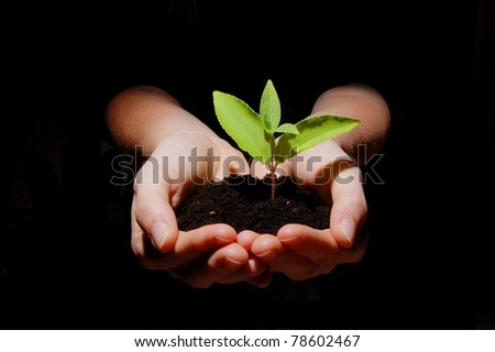 young plant in hand showing concept of youth and growth - stock photo