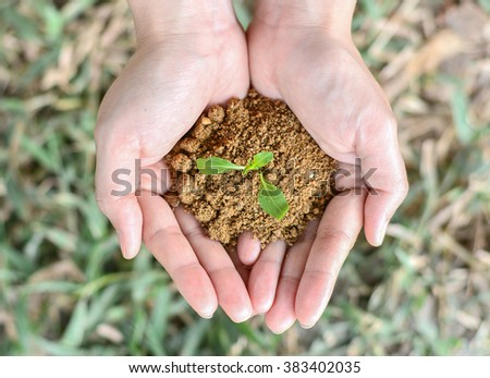 Young plant in hands. - stock photo