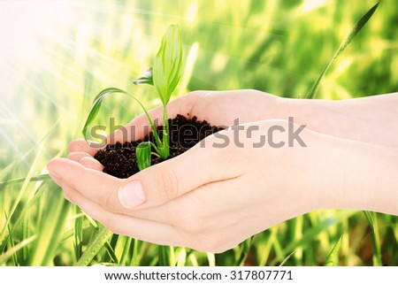 Young plant in hands with soil on green grass background