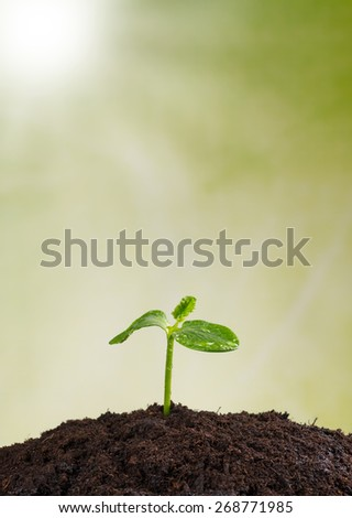 Young plant in pile of earth, concept of new life
