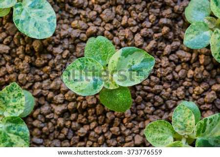 Young plant in pot isolated on white background - stock photo