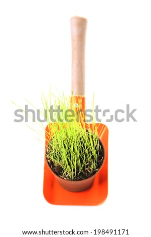 Young plant in pot on garden shovel isolated on  white