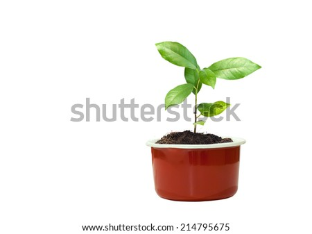 young plant in red flowerpot  - stock photo