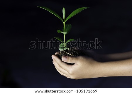 Young plant in the hands of women