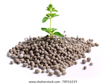 Young plant is growing from the pile of nitrogen  fertilizer in granules. - stock photo