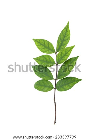 Young plant isolated against white background - stock photo