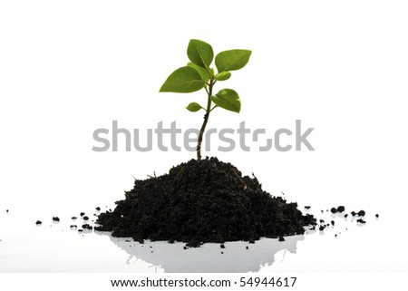 Young plant isolated on white - stock photo