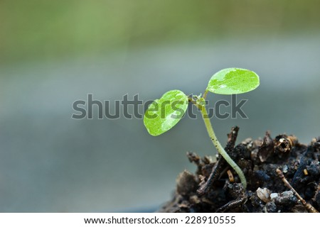 young plant new life - stock photo