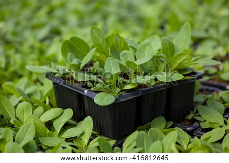 young plant new life ,Green sapling Ecology World Environment Day CSR Seedling Go Green Eco Friendly Earth Health Care Food Garden New Life concept. - stock photo