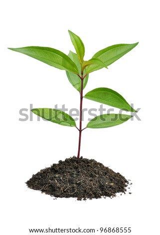 Young plant on a white background - stock photo