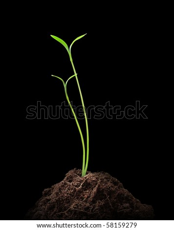 Young plant on black background - stock photo