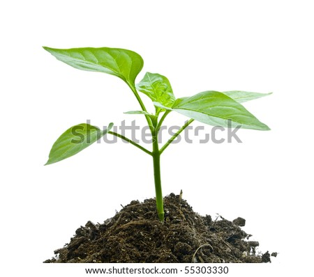 Young plant on the white backgrounds - stock photo
