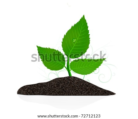 Young plant on the white backgrounds. - stock photo