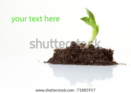 Young plant on  white background - stock photo
