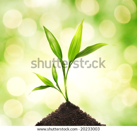 Young plant over abstract blurred background - stock photo
