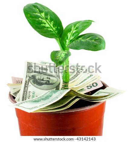 Young plant over banknotes isolated on white background