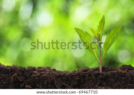young plant showing ecology growth or nature concept with copyspace