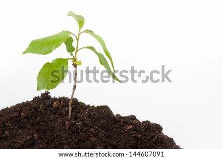 Young plant sprout on the soil, isolated on white background
