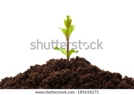 Young plant sprouts from the soil isolated on white. - stock photo