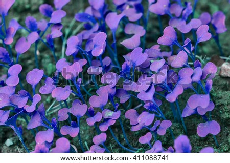 young plant violet color in garden - stock photo