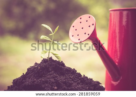 Young plant  with filter effect retro vintage style - stock photo