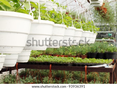 Young plants are grown in the hot-house - stock photo